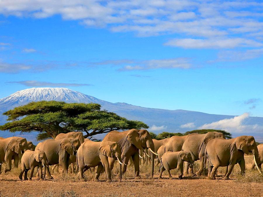 Кения перестала выдавать визы в аэропортах